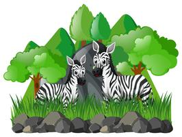Two zebras in the forest