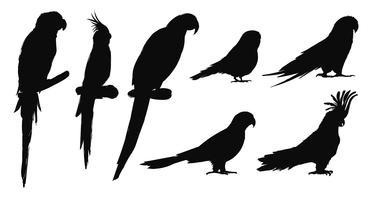 Style de dessin d'illustration de la collection d'oiseaux perroquet