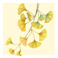Handritad ginkgo blomma illustration
