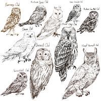 Estilo de desenho de ilustração da coleção de pássaros de coruja