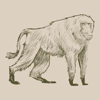 Illustration drawing style of monkey