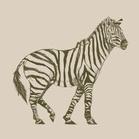 Illustration ritning stil av zebra