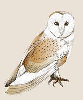 Wild owl vintage drawing