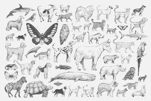 Conjunto de animais vintage