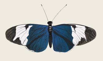 Illustration ritning stil av fjäril