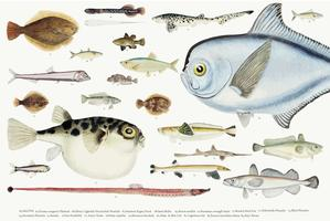 Illustration vectorielle colorée de la collection de dessin de poisson
