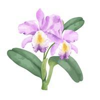 Flor de orquídea rosa desenhada de mão