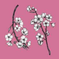 Ilustración de la flor de la flor de cerezo