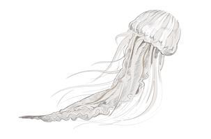 Estilo de desenho de ilustração de água-viva