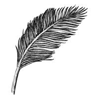 Hand drawn palm leaf