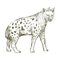 Illustration ritstil av hyena