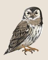 Estilo de desenho de ilustração de coruja