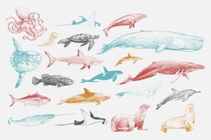Conjunto de vida marinha