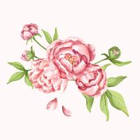 Illustration de fleur de pivoine rose dessiné à la main