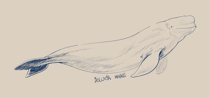 Estilo de desenho de ilustração de baleia beluga