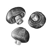 Hand-drawn champignon mushroom isolated