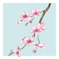 Hand drawn cherry blossom flower illustration