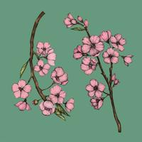 Illustratie van Cherry Blossom-bloem