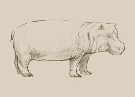 Djur Illustration av flodhäst