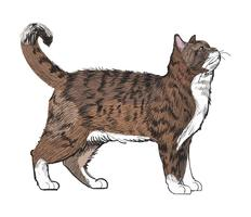 Tier-Illustrations-Vektor-Satz