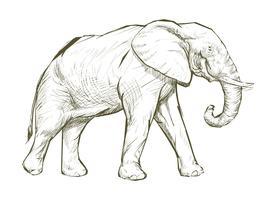 De stijl van de illustratietekening van olifant