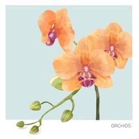 Illustrazione disegnata a mano del fiore dell'orchidea
