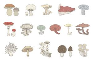 Colored drawing set of mushrooms