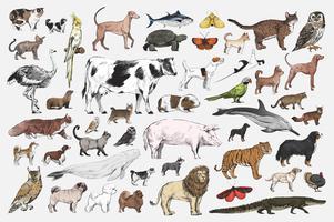 Conjunto de animais mistos