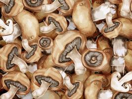 Luz marrom cogumelos ilustração de fundo