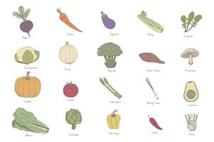 Colored illustration set of labeled vegetables