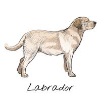 Illustration drawing style of dog vector