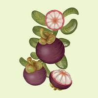 Ritning av mangosten