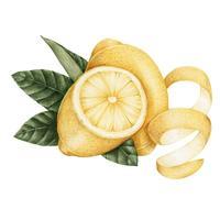 Estilo de desenho de ilustração de limão