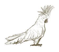 De stijl van de illustratietekening van papegaai