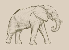 Style de dessin d'éléphant