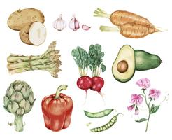 Hand drawn vegetable collection vector