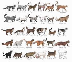Diverse cats poster