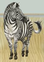 Handdragen zebra