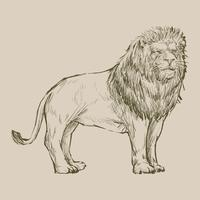 Illustration drawing style of lion