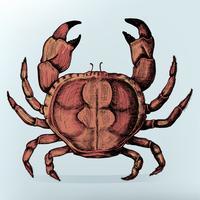 Caranguejo desenhado à mão isolado