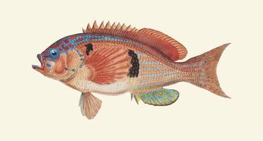 snygg fisk