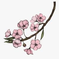 Illustration av Cherry Blossom Flower