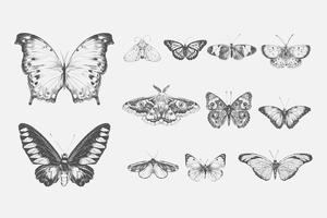 Illustration drawing style of butterfly collection