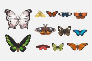 Conjunto de várias borboletas