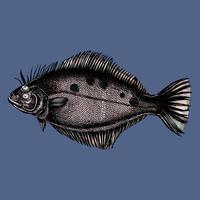 Handgezeichnete Flunder Plattfisch