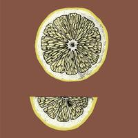 Hand drawn slice of lemon