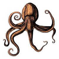 Hand drawn octopus isolated
