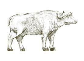 Illustration ritstil av buffel