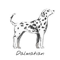 Ilustración dibujo estilo de perro