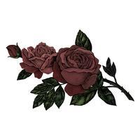 Rosa rossa fresca disegnata a mano